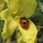 Wanna-Bee
